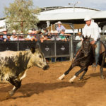 Kydras Acres Mercury & Andrew Chapman