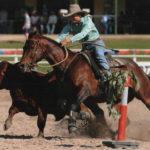 Jaye Hall & Daley's Playrio, Warwick Stallion draft 2010