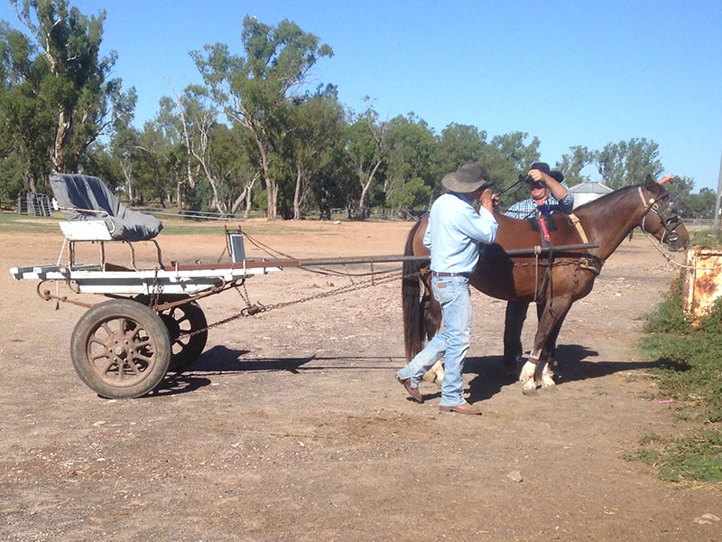 Taylor Made filly being harnessed by Terry Hall & Cameron Lee