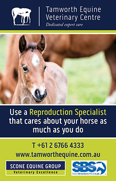 Tamworth Equine Veterinary Centre