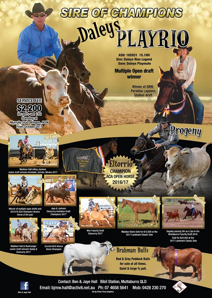 Australian Campdrafting ad by Show Pony Graphics