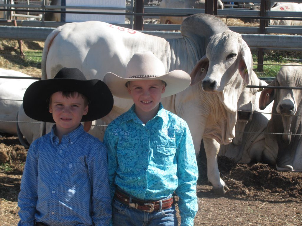 Big Country Bull sale February 2015. Madison & Wyatt