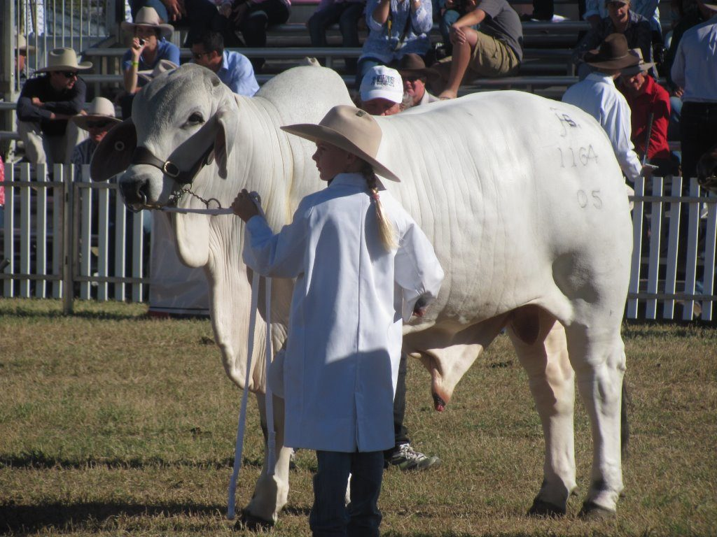 Madison Hall. .Halls Brahmans, Beef Week 2015