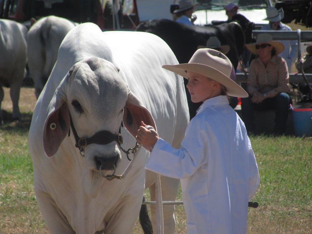 Madison Hall. Halls Brahmans, Beef Week 2015