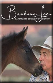 Barbara Lee Equine Photography