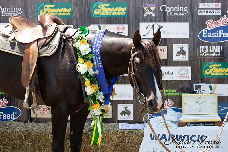 Hazelwood Congressman, 2018 Warwick Stallion draft Winner.